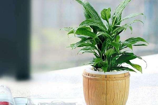 如何利用花卉植物美化新房子【温江装修公司】